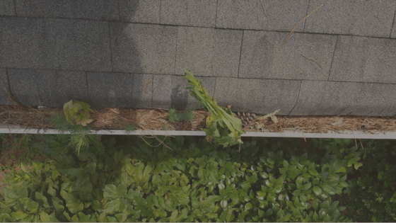 Do your gutters need to be cleaned? 5 easy ways to tell!